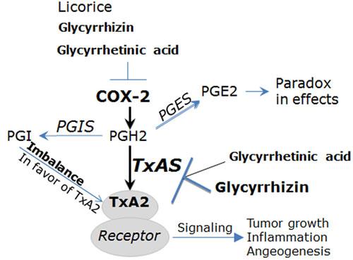 The COX/TxA2 pathway is the pharmacological target of glycyrrhizin (GL) and glycyrrhetinic acid (GA).
