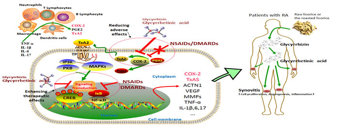 The COX-2/TxA2 pathway is a crucial mechanism underlying the toxicity reducing and efficacy enhancing effects of Glycyrrhizin (GL) and glycyrrhetinic acid (GA) to NSAIDs/DMARDs.