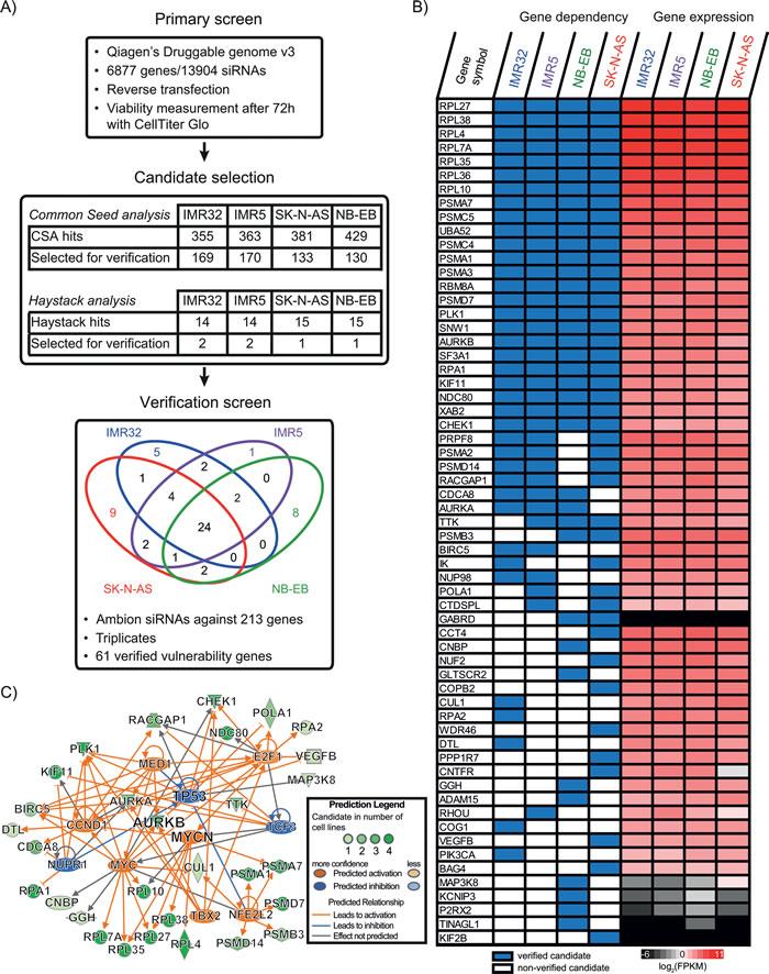 RNAi screening of four neuroblastoma cell lines revealed 61 vulnerability genes.