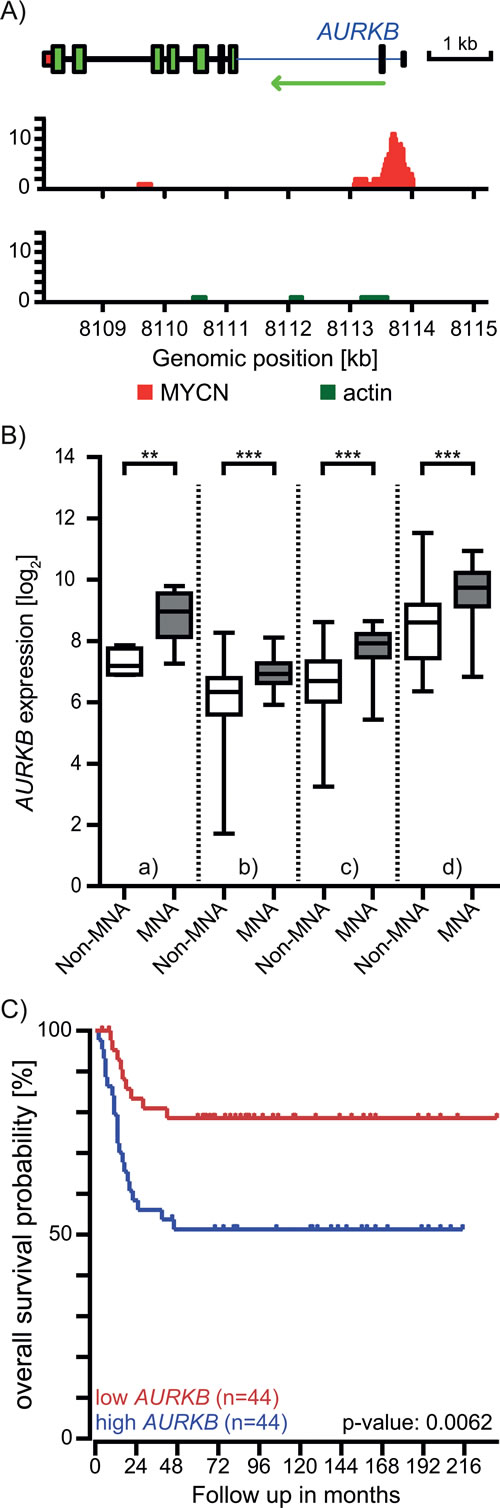 MYCN regulates the expression of the AURKB gene.
