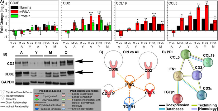 Key immune molecular factors in spleen related to key molecule affecting tumor progression as a function of age.