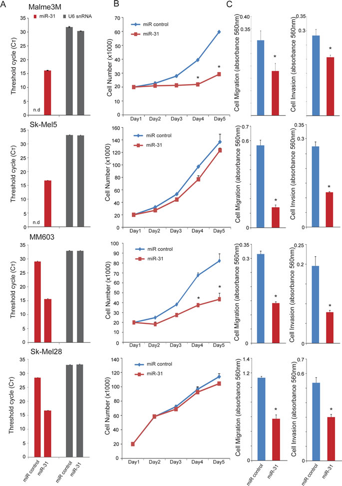 Effect of miR-31 overexpression on proliferation, migration, and invasion of melanoma cells.