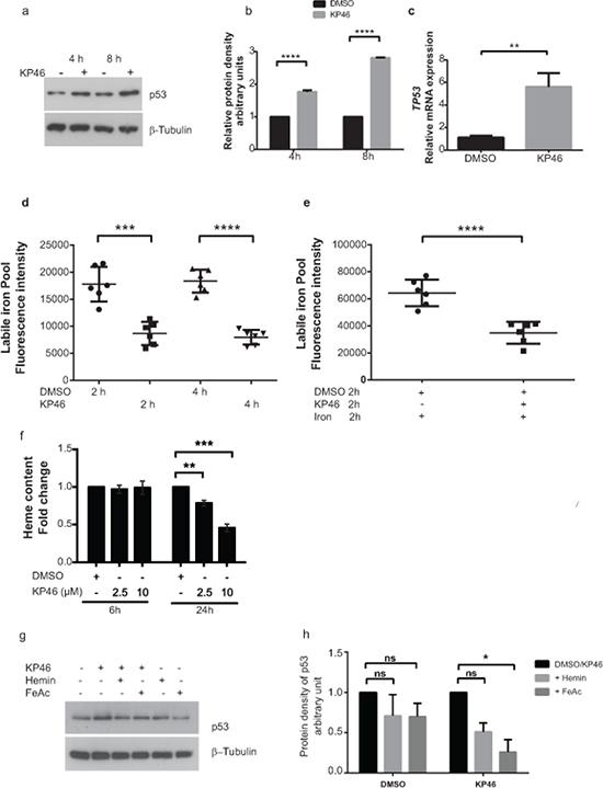 KP46 upregulates p53 in an iron dependent manner.