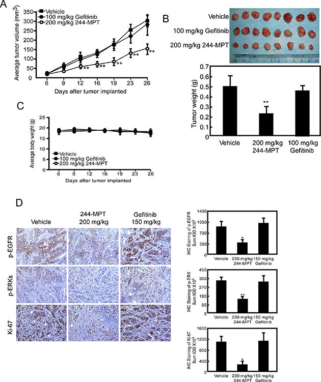 244-MPT inhibits tumor growth in a gefitinib-resistant NSCLC PDX mouse model.