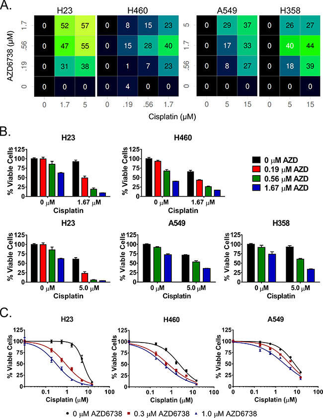AZD6738 sensitizes NSCLC cell lines to cisplatin and synergizes strongly with cisplatin in ATM-deficient H23 cells.