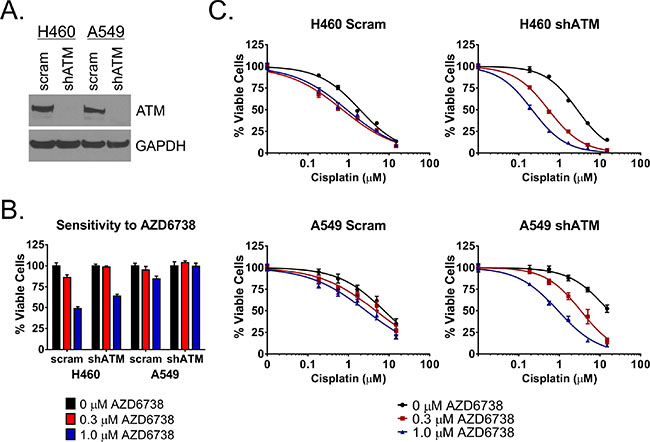 AZD6738 sensitizes ATM knockdown cells to cisplatin.