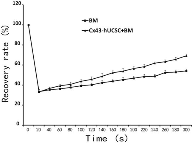 Cx43-hUCSC improves GJIC among cells.