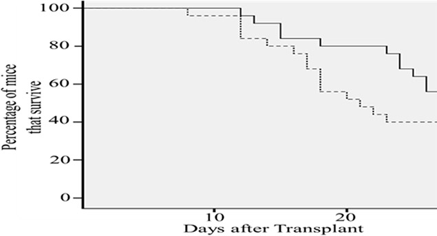 Cx43-hUCSC transplantation increases survival time of mice with minimal residual disease (MRD).