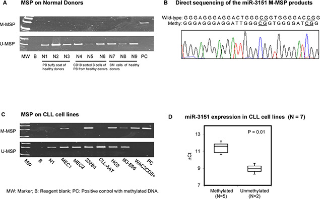 Methylation of miR-3151 in normal donors and cell lines.