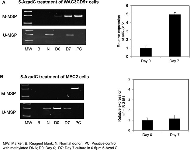 Effect of 5-Aza-2′-deoxycytidine (5-AzadC) treatment on WAC3CD5+ and MEC2 cells.