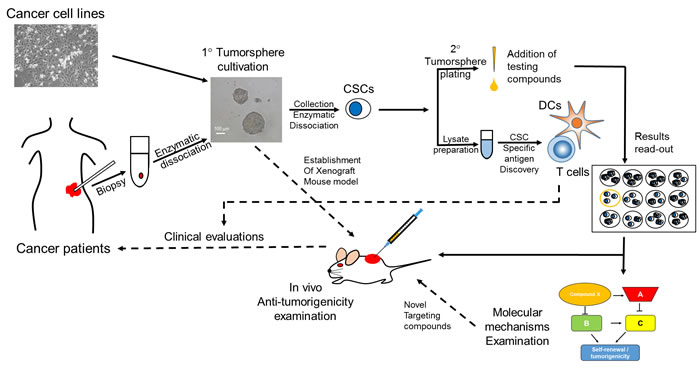 Suggested screening flowchart in the discovery of anti-CSC agents with tumorsphere assay.