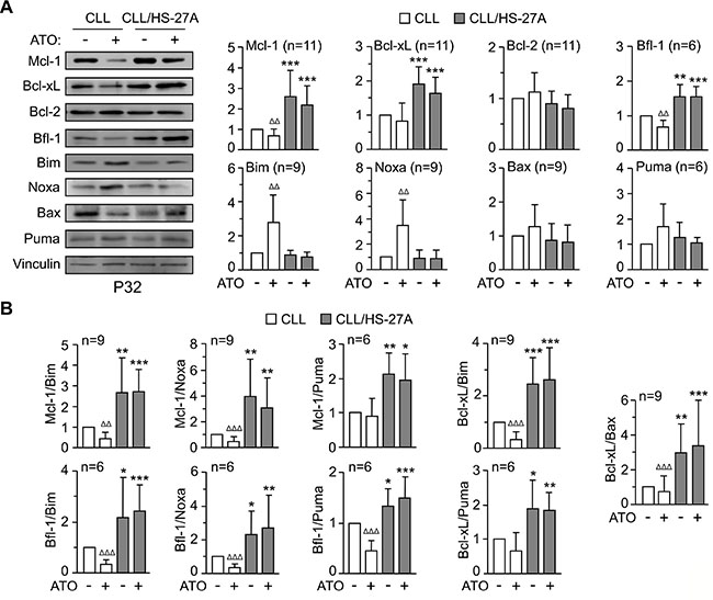 Regulation of Bcl-2 family proteins in CLL-stromal cell co-cultures and effect of ATO.