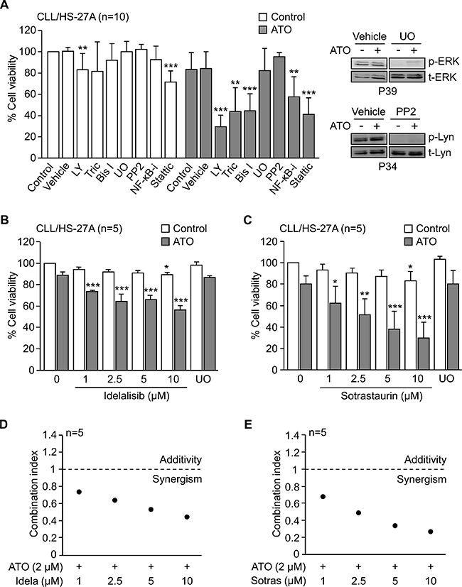 PI3Kδ and PKCβ activities are involved in the stroma-induced resistance of CLL cells to ATO.