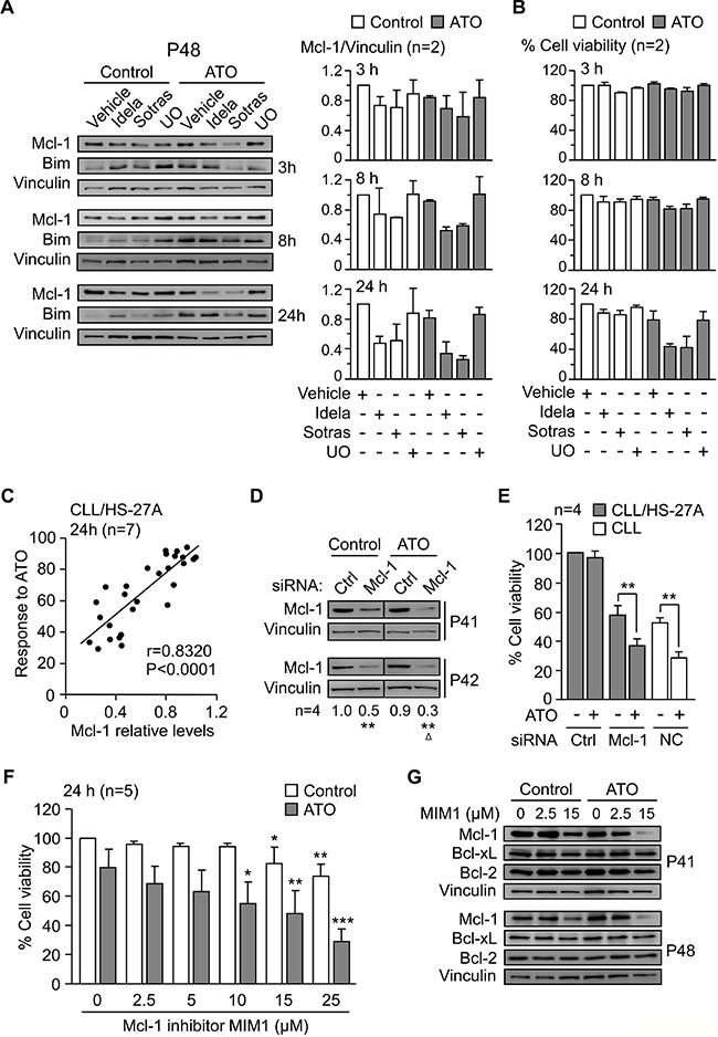 Mcl-1 plays a central role in the mechanism of CLL cell resistance to ATO induced by stroma.
