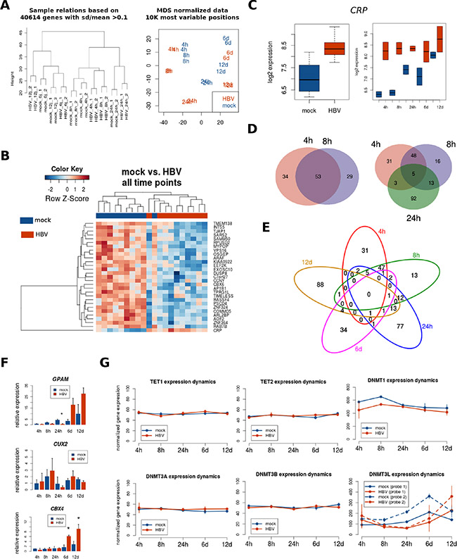 Transcriptome analysis after HBV infection.