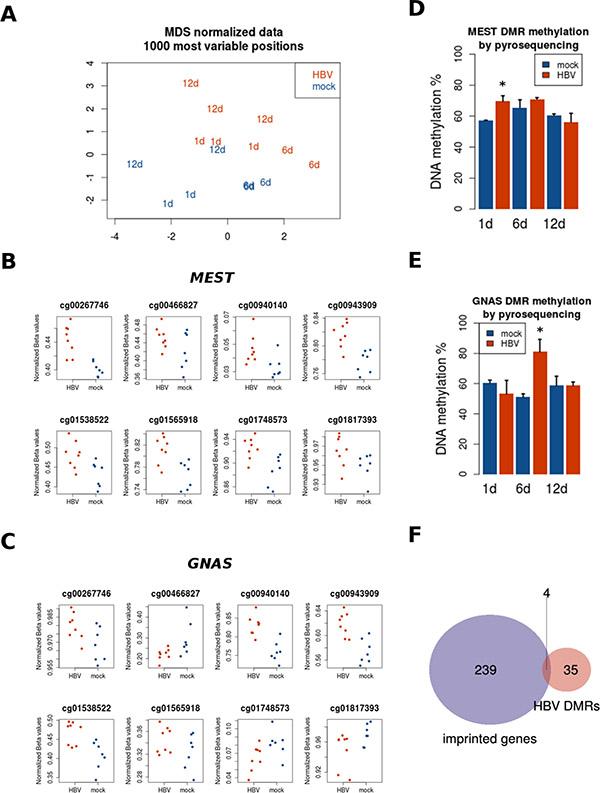 Region-level DNA methylation changes induced by HBV.