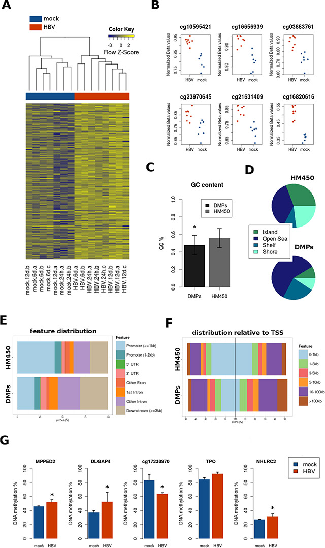 Site-level DNA methylation changes induced by HBV.