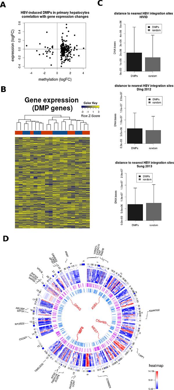 HBV DNA methylation signature and HBV integration sites.