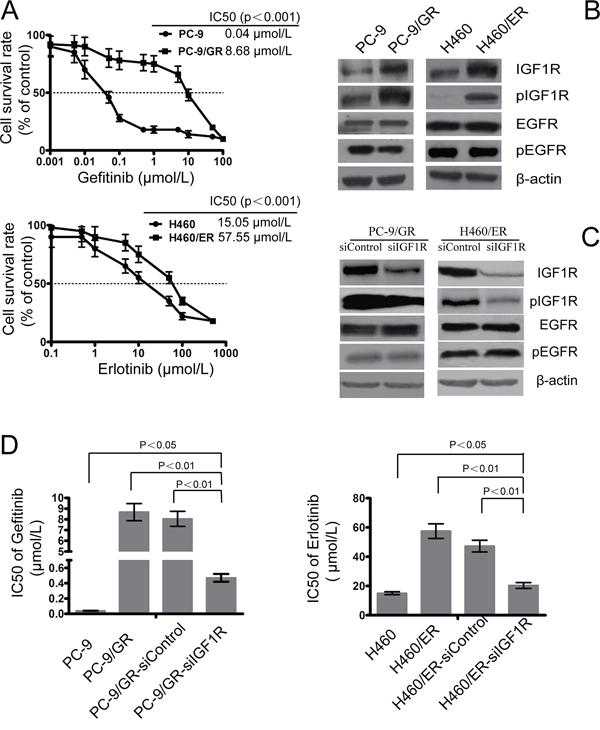 Role of IGF1R on the sensitivity to gefitinib and erlotinib in EGFR-TKIs-resistant cells.