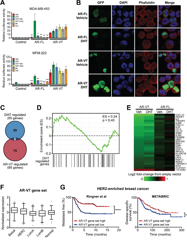 AR-V7 is constitutively active, resistant to AR antagonists and regulates a transcriptome distinct from AR-FL.
