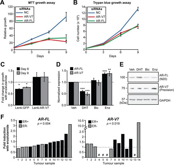 AR-V7 regulates the growth of MDA-MB-453 cells and response to enzalutamide.