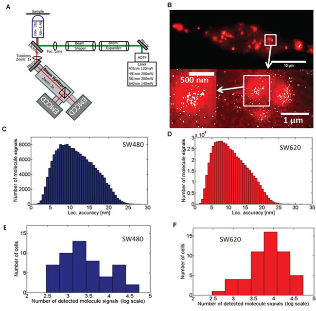 Single-Molecule Localization Microscopy and detection of miR-31 molecules in cancer cell lines.