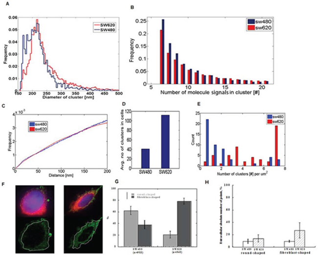 SMLM images of single cells reveal clustering of miR-31 molecules and differential extracellular distribution in low- and highly metastatic CRC cells.
