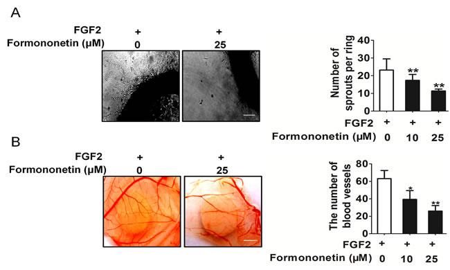 Formononetin inhibits FGF2 induces angiogenesis
