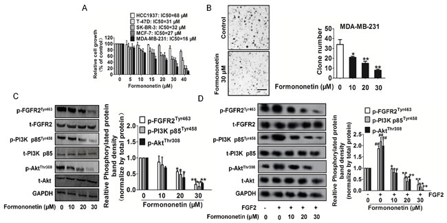Inhibitory effects of formononetin on tumor cells.