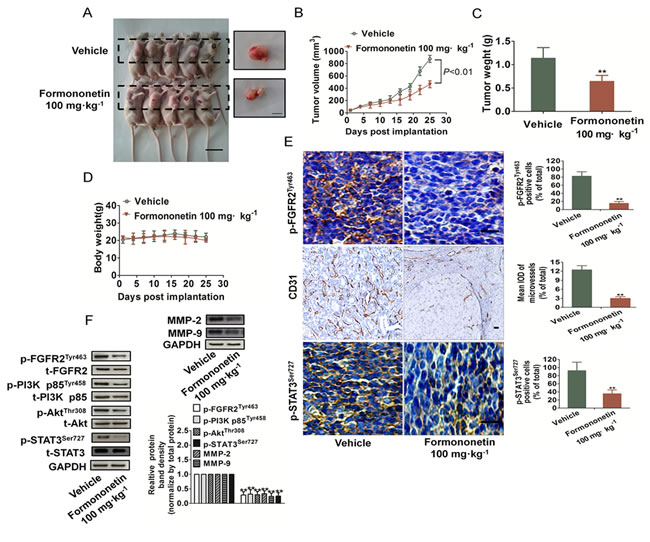 Formononetin inhibited growth and angiogenesis on MDA-MB-231 breast cancer xenografts.