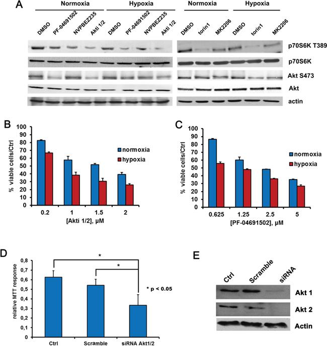 Hypoxia influences BCBL1 cells sensitivity to Akt or PI3K/mTOR inhibition.
