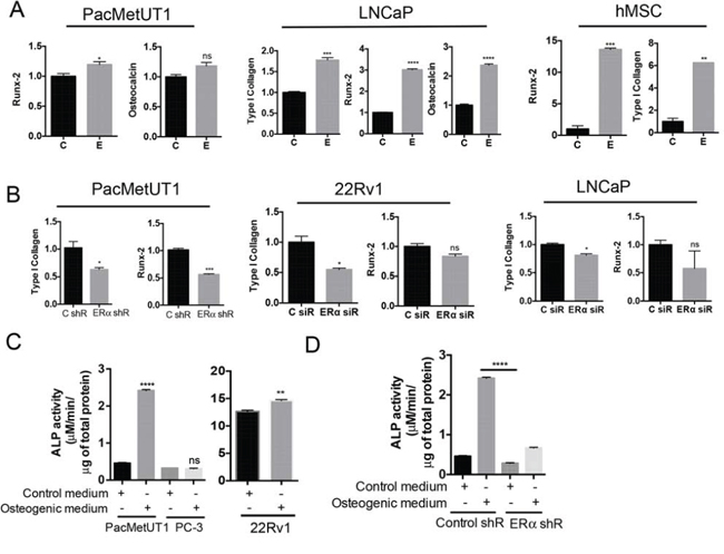 Estrogen/ERα signaling induces osteoblast-like properties in prostate cancer cells.