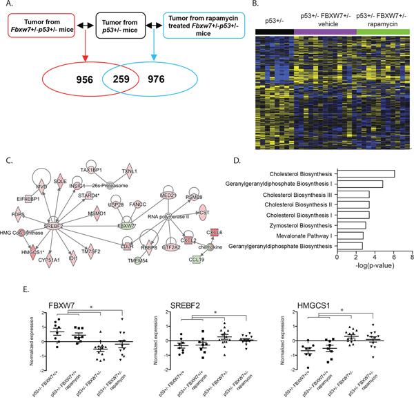 Significant transcriptional deregulation in Fbxw7 heterozygous thymic lymphomas.