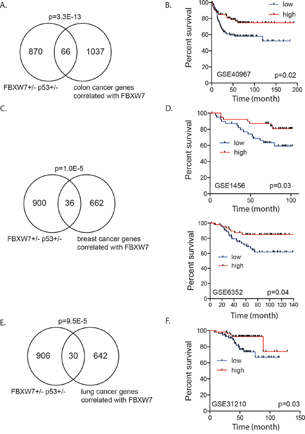 Fbxw7 correlated gene expression signature associated with disease free survival in human cancer patients.