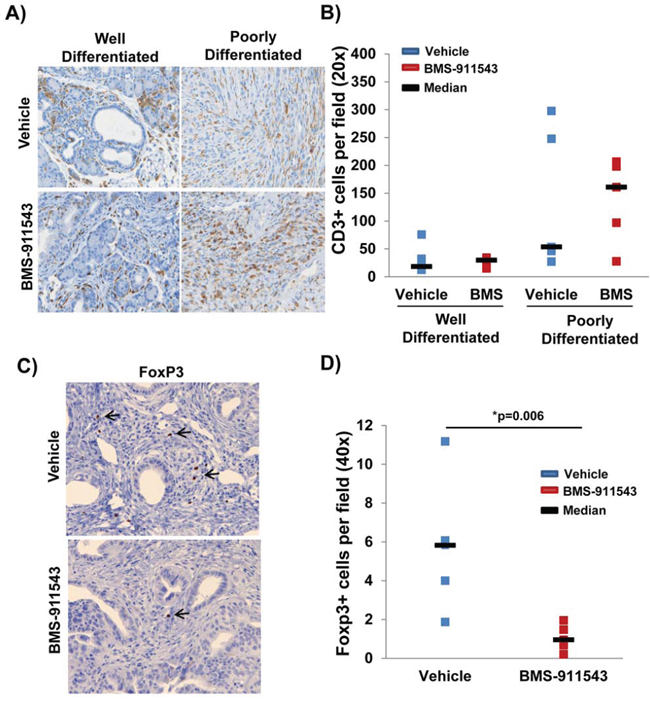 Reduced percentage of intratumoral FoxP3+ T regulatory cells in mice administered BMS-911543.