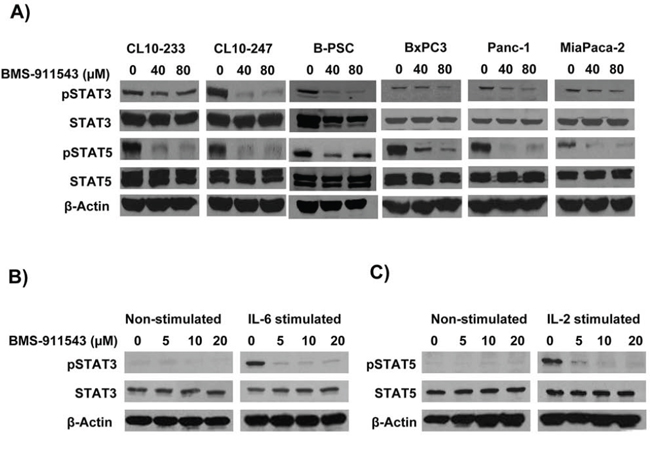 In vitro effects of BMS-911543 on cytokine-stimulated cells.