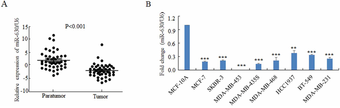 MiR-630 is downregulated in breast cancer tissues as well as breast cancer cell lines.