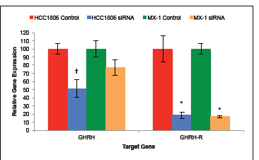 Silencing of GHRH-R mRNA with siRNA significantly suppressed GHRH gene expression by HCC1806 but not by MX-1.
