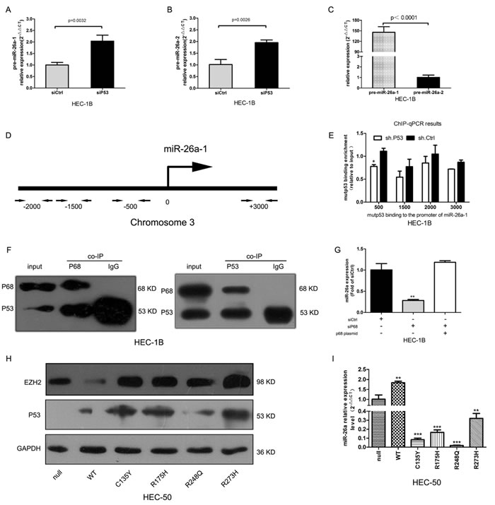 Mutp53 inhibits miR-26a via interactions with p68 and enhances EZH2 expression.
