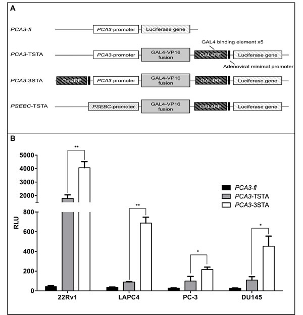 The Three-Step-Transcriptional Amplification system provides strong amplification of the
