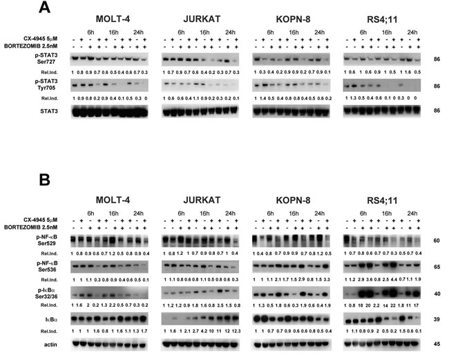 Effects of bortezomib/CX-4945 combined treatment on STAT3 phosphorylation and NF-κB activation.