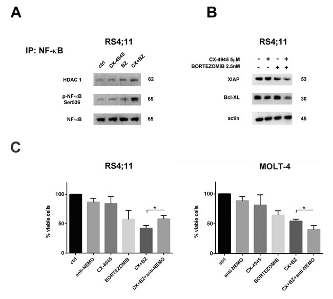 Bortezomib/CX-4945 combined treatment activated NF-κB pro-apoptotic functions in the RS4;11 cell line.
