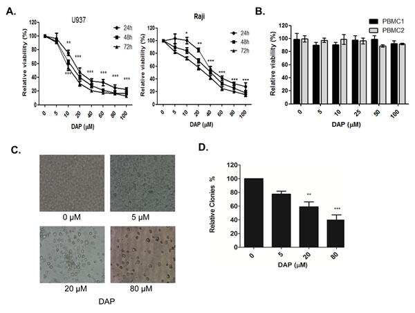 DAP inhibited AML cell growth.