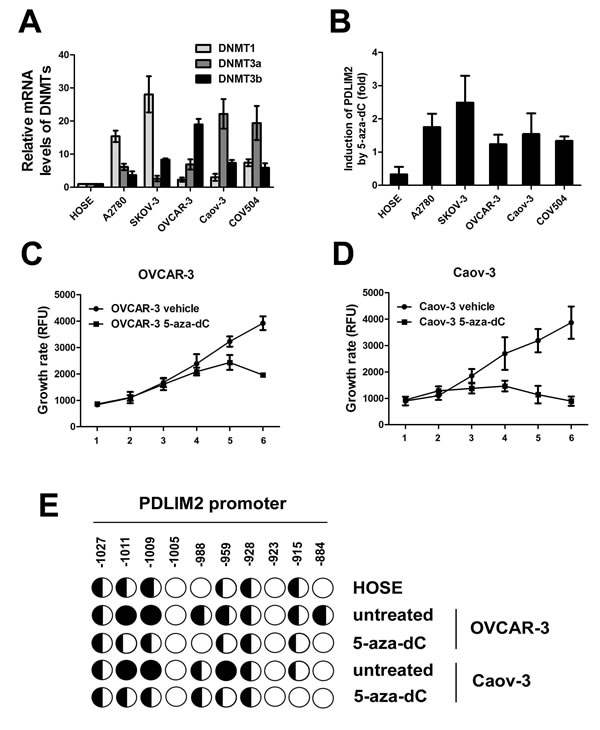 DNA methylation-mediated repression of PDLIM2 in ovarian cancer cells.