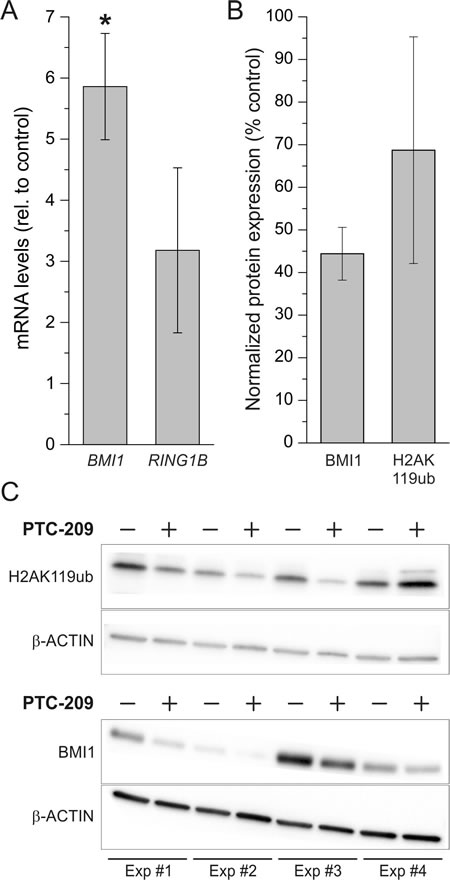 Effect of PTC-209 on mRNA expression of BMI1 and RING1B and on protein levels of BMI1 and H2AK119ub.