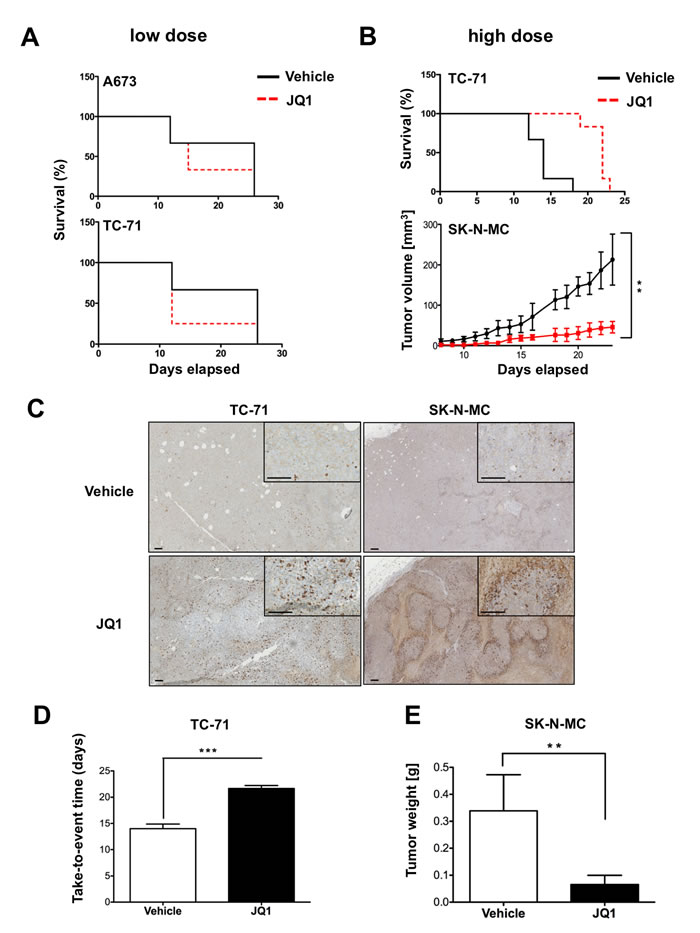 Treatment with JQ1 inhibits ES tumor growth