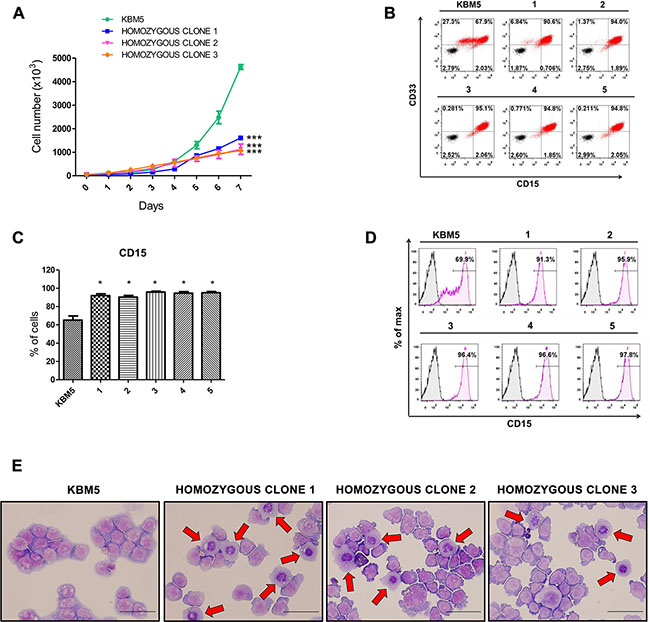 Effects of CRISPR/Cas9-mediated ASXL1 mutation correction on cell growth and myeloid differentiation.