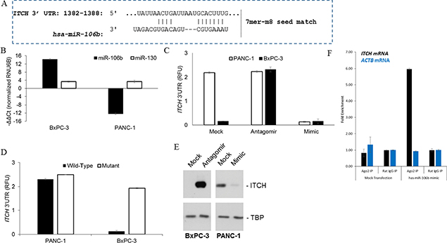 Identification of ITCH as a target of miR-106b in pancreatic cancer cells.