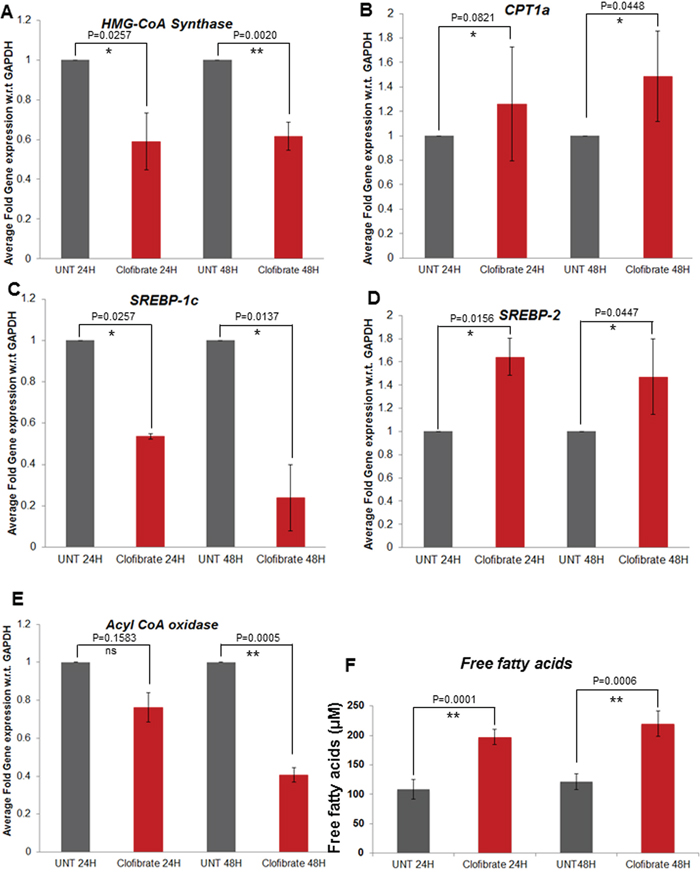 Effect of clofibrate treatment on breast cancer cell lipid metabolism associated genes A–E.