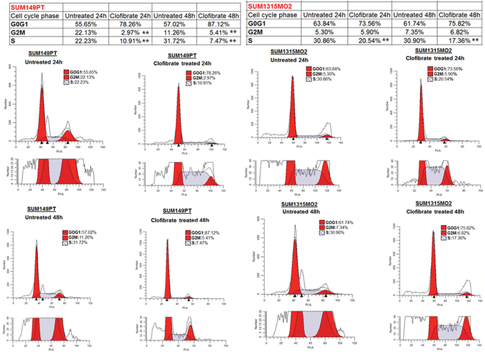 Effect of clofibrate on breast cancer cell cycle events.
